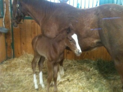 Momma and baby horse in their cozy stall at Cross Creek Farm.