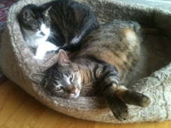 Motor and Mitts. 2 Great cats just hanging out