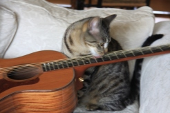 Motor Scooter, the cat, loves to play the guitar
