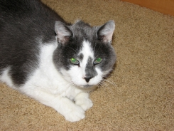Afton, Cat from Prior Lake, MN