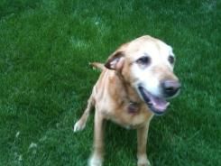 Bella, Beautiful Old Girl.