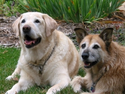 Deano and Ellie, 2 great dogs from Lakeville, MN