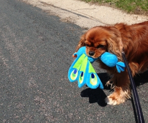 Ellie_dog_walking_butterfly