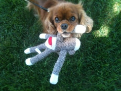 Ellie is a hoot with her monkey.