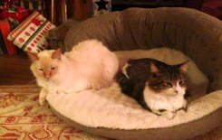 Frosty & Henry, Cats from Prior Lake, MN