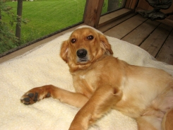 Honey relaxes on the porch.