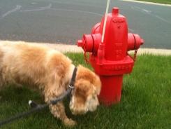 Jack loves to sniff around.
