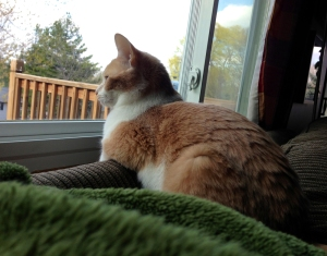 Lilith_Lakeville_Cat