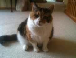 Sweet Lucy, Kitty form Eagan, MN