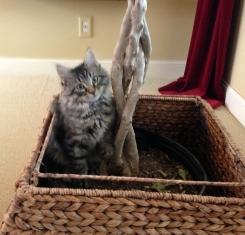 Ricky, Kitten from Lakeville MN