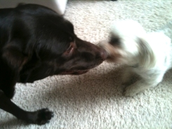 Sophie and Leo playing tug of war.